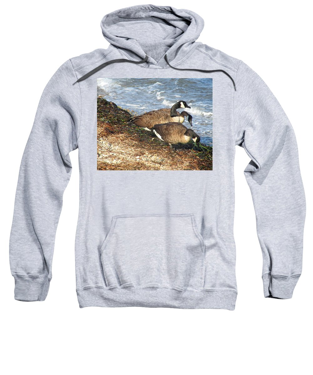 Canada Geese Sweatshirt featuring the photograph Cape Cod Beachcombers 1 by Mark Sellers