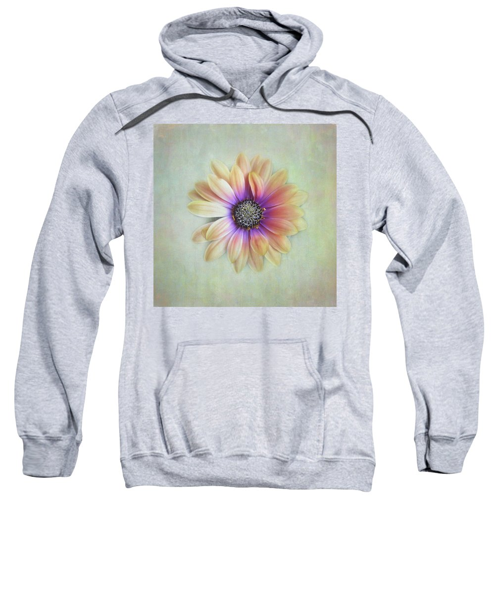 Bloom Sweatshirt featuring the photograph Cape Daisy Looking Up by David and Carol Kelly