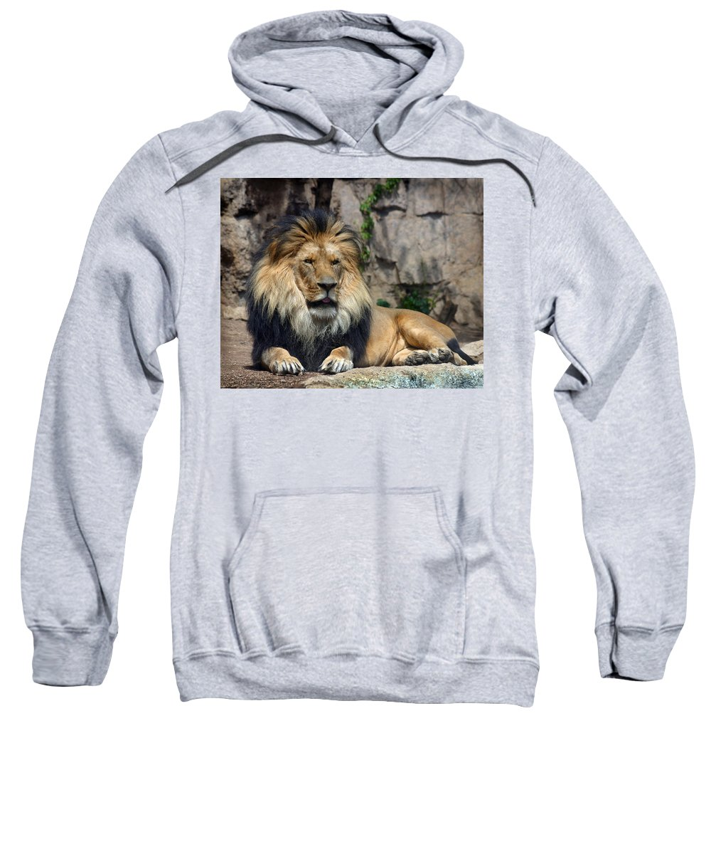 Lion Sweatshirt featuring the photograph Captive Pride by Anthony Jones