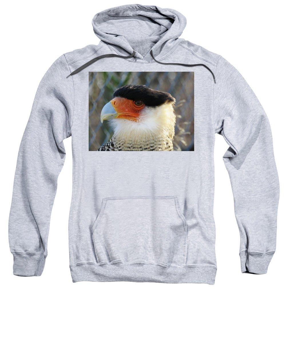 Bird Sweatshirt featuring the photograph Caracara Bird by FL collection