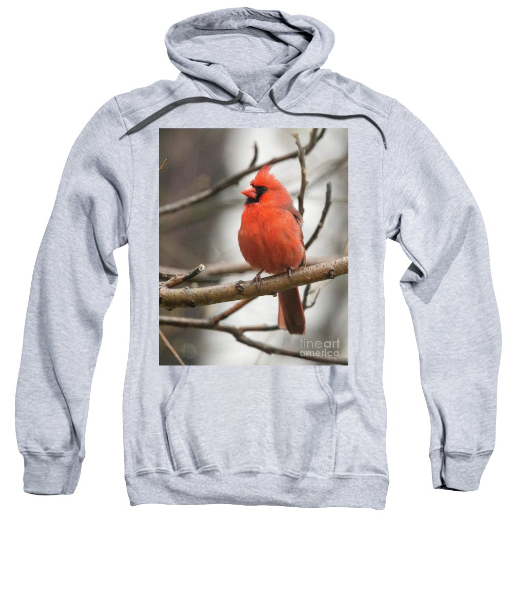 Northern Sweatshirt featuring the photograph Cardinal by Laurie Pocher