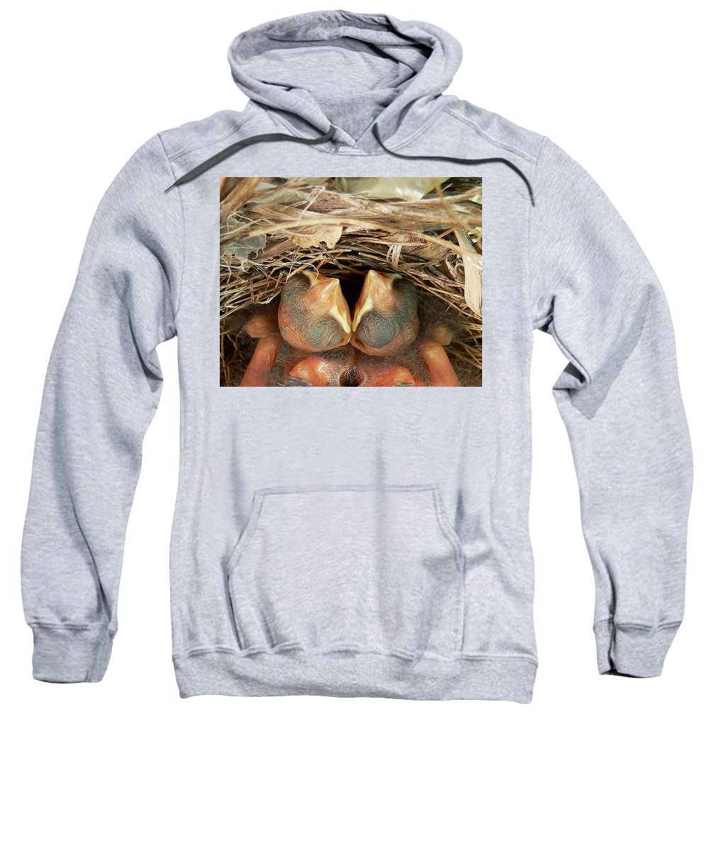 Cardinals Sweatshirt featuring the photograph Cardinal Twins - Snugly Sleeping by Al Powell Photography USA