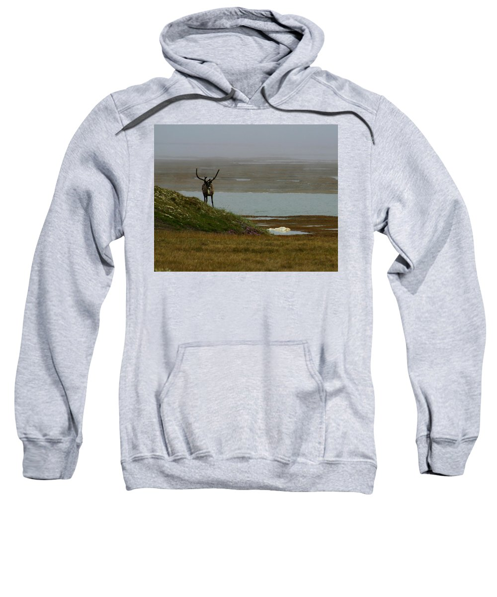 Caribou Sweatshirt featuring the photograph Caribou Fog by Anthony Jones