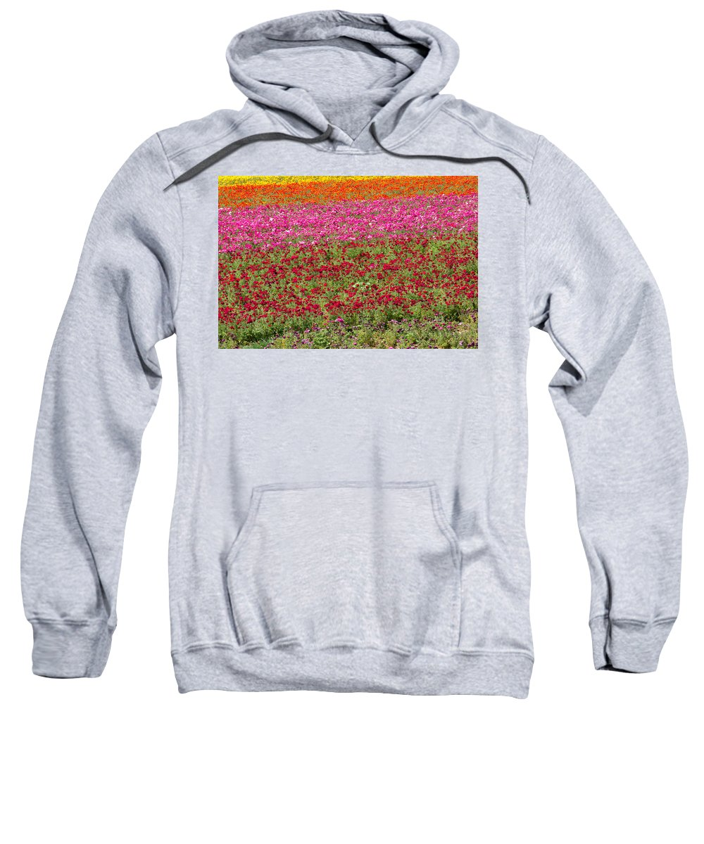 Flowers Sweatshirt featuring the photograph Carlsbad Flower Fields by Garry Loss