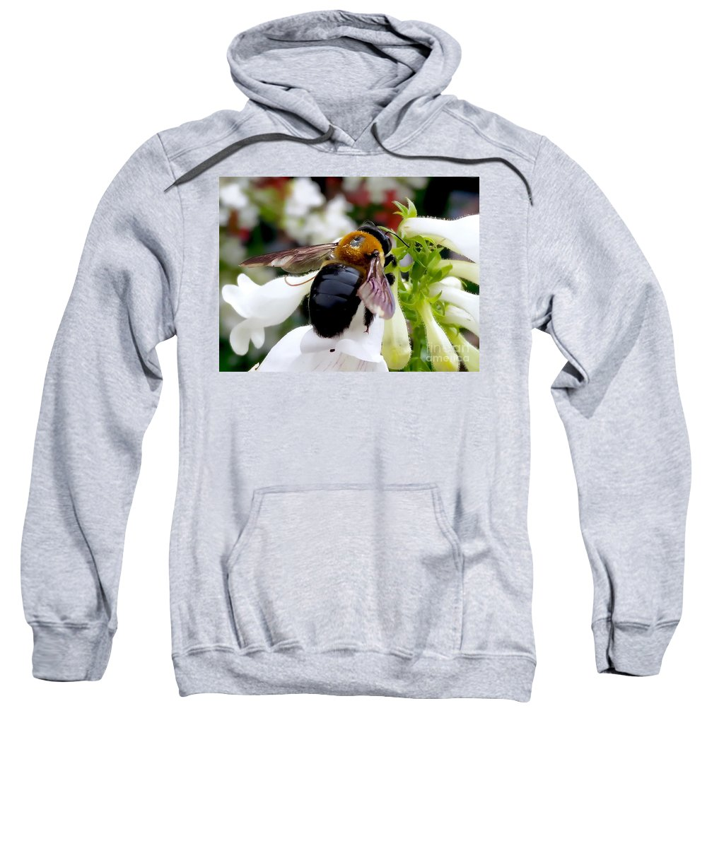 Carpenter Bee Sweatshirt featuring the photograph Carpenter Bee by Mioara Andritoiu