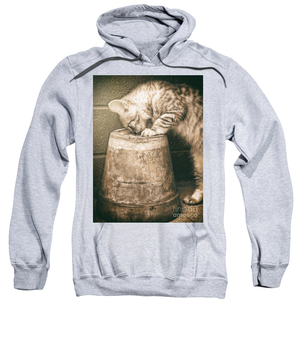 Pet Sweatshirt featuring the photograph Cat Curiosity by Giuseppe Esposito