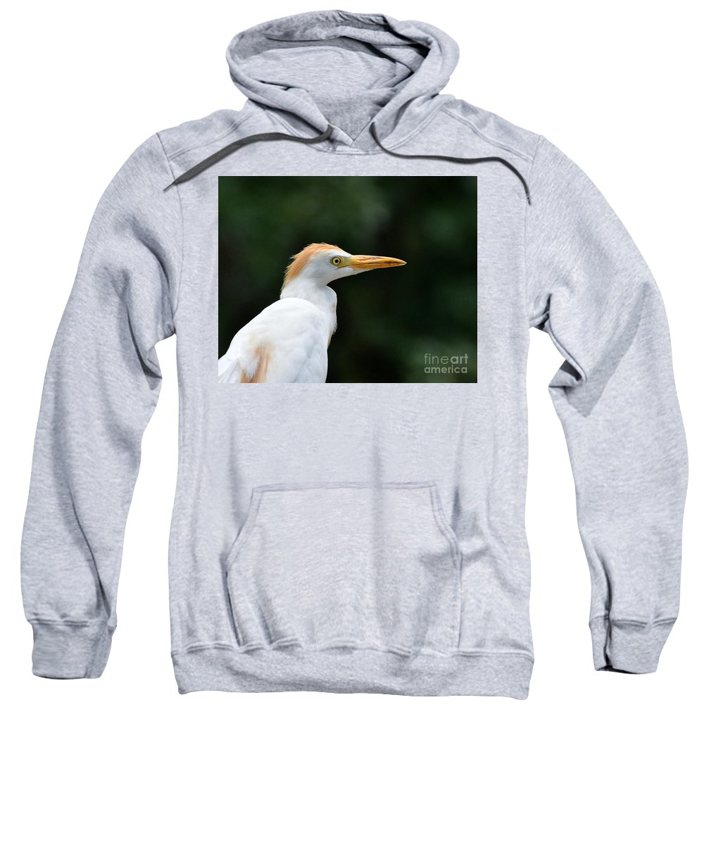 Egret Sweatshirt featuring the photograph Cattle Egret Close-up by Al Powell Photography USA