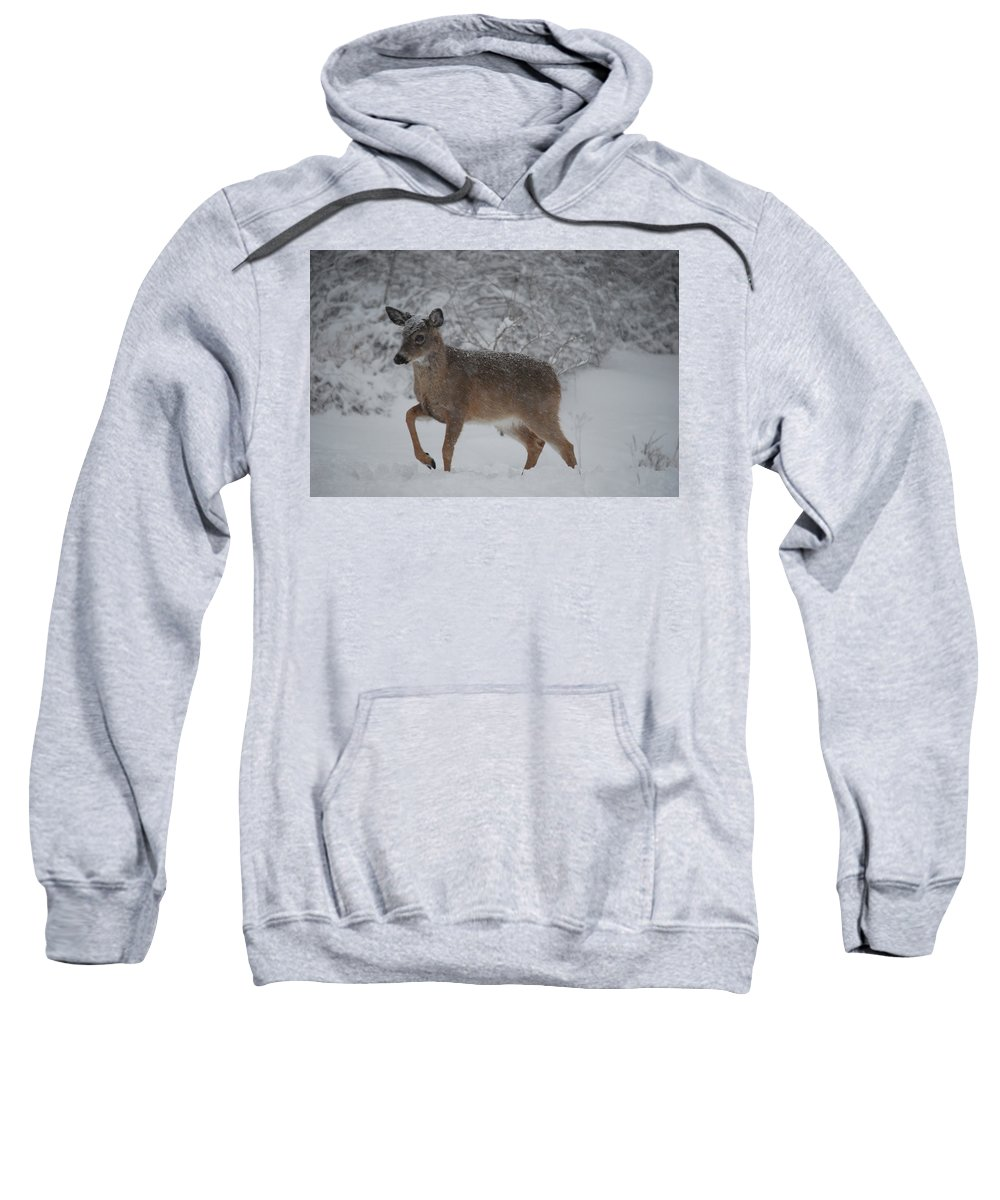 Deer Sweatshirt featuring the photograph Charge by Lori Tambakis