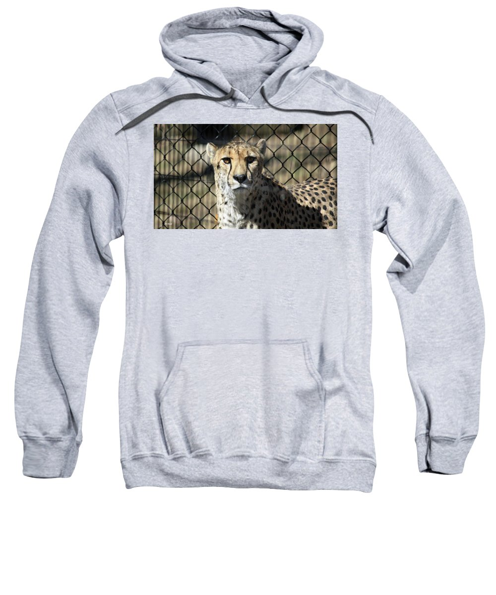 Maryland Sweatshirt featuring the photograph Cheetah Alert by Ronald Reid