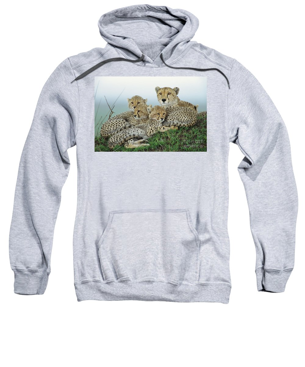00345011 Sweatshirt featuring the photograph Cheetah And Her Cubs by Yva Momatiuk John Eastcott