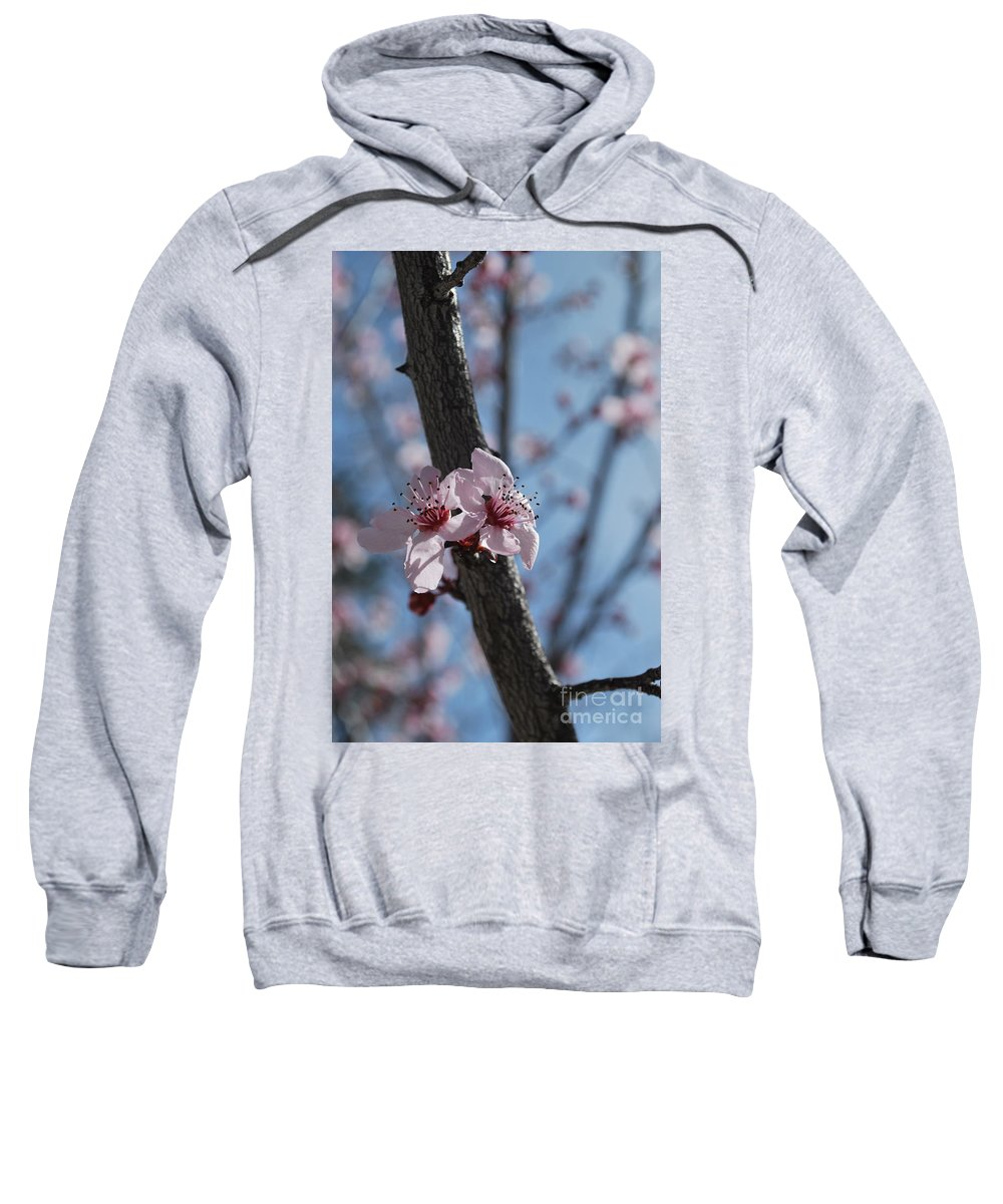 Sweatshirt featuring the photograph Cherry Blossom Branch by Heather Kirk