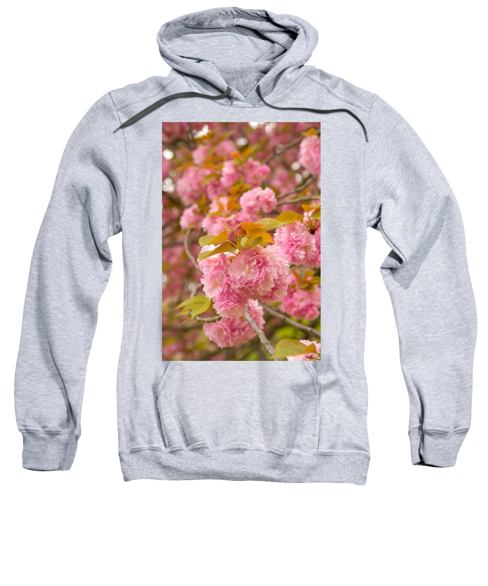 Cherry Sweatshirt featuring the photograph Cherry Blossom by Sebastian Musial