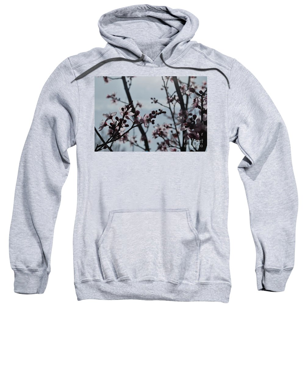 Sweatshirt featuring the photograph Cherry Blossom Transparency by Heather Kirk