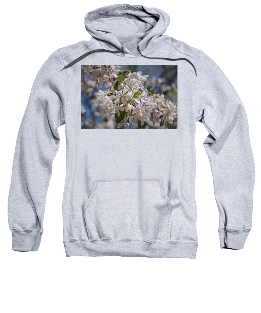 Background Sweatshirt featuring the photograph Cherry Blossoms by Joan Carroll