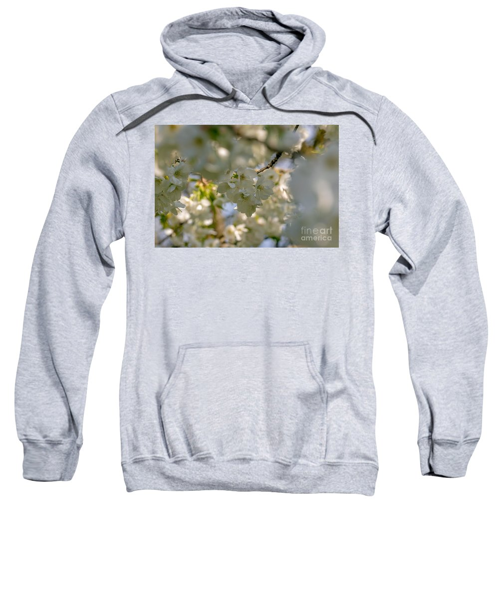 Cherry Blossom Sweatshirt featuring the photograph Cherryblossom In Focus by Marc Daly