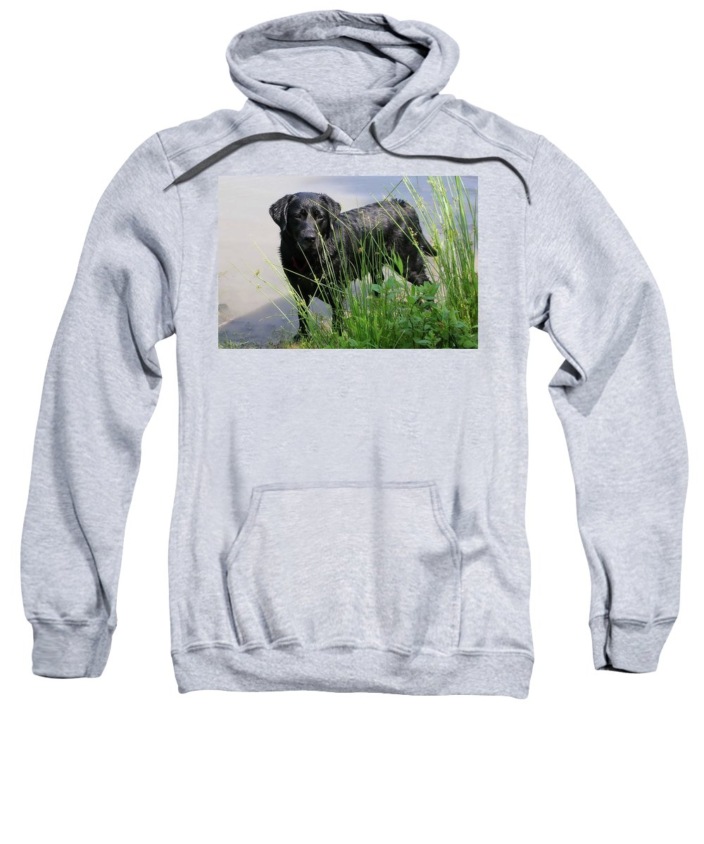 Animals Sweatshirt featuring the photograph Chicago 0121 by Guy Whiteley