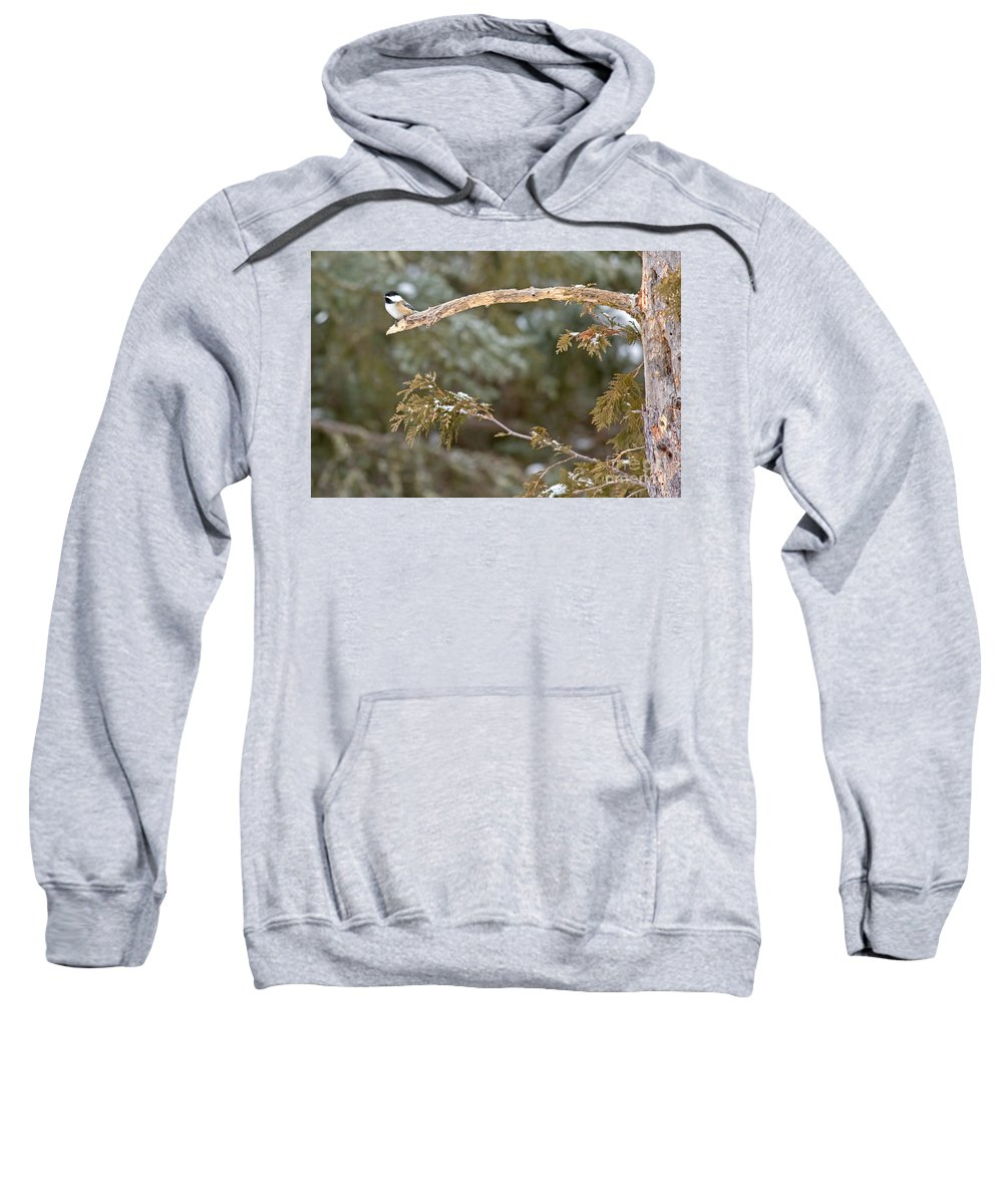 Blackcapped Chickadee Sweatshirt featuring the photograph Chickadee In Minnesota by Natural Focal Point Photography