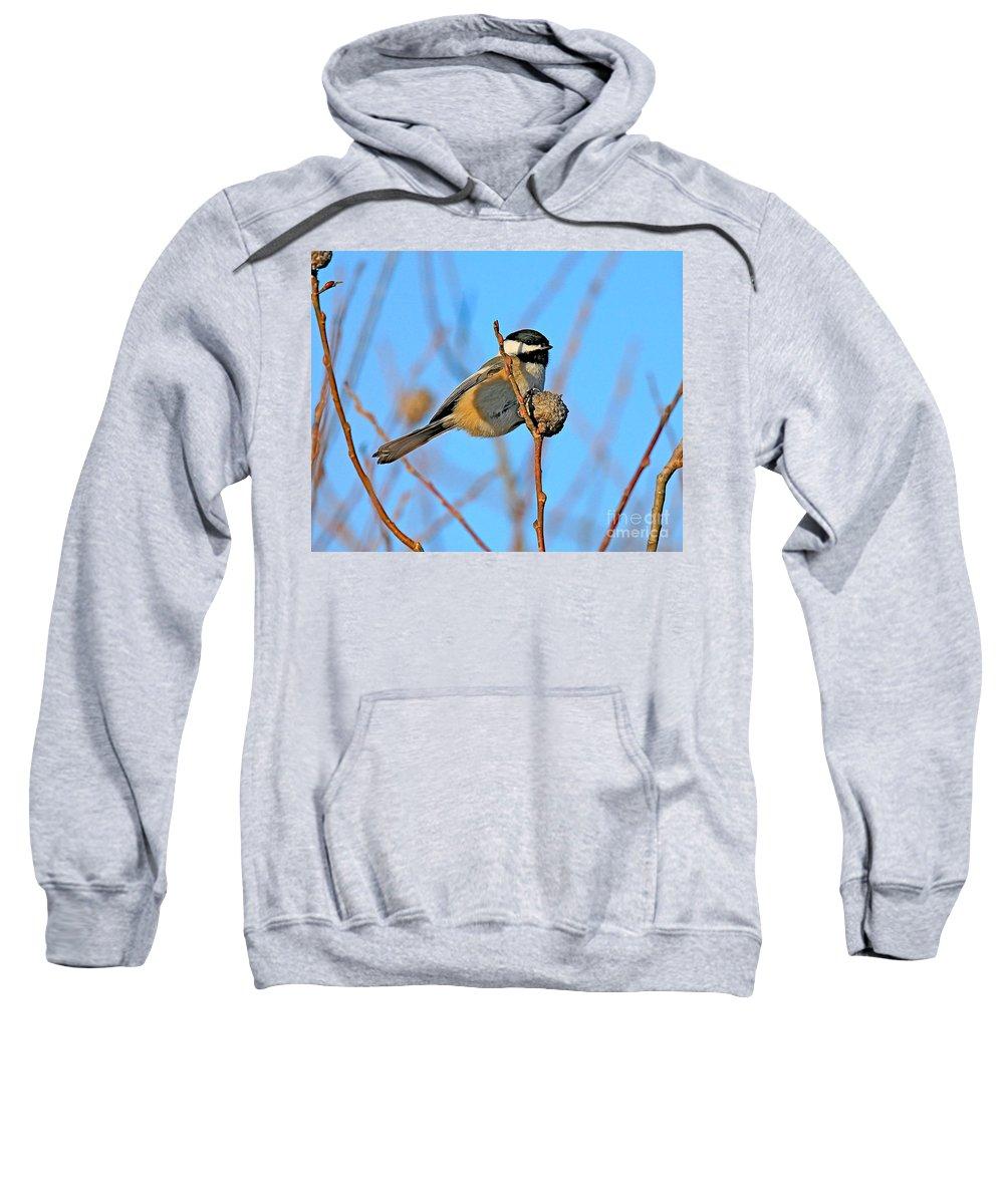 Chickadee.biid Sweatshirt featuring the photograph Chickadee by Robert Pearson
