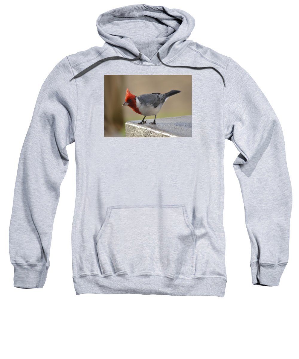 Bird Sweatshirt featuring the photograph Chillin On Cement Slab by Karen Rose Warner