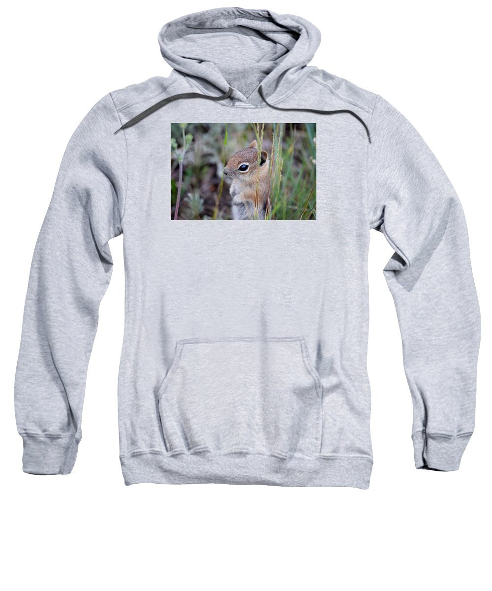 Chipmunk Sweatshirt featuring the photograph Chipmunk by Alice Kelsey