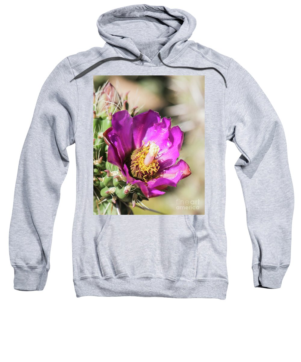 Natanson Sweatshirt featuring the photograph Cholla Flower by Steven Natanson