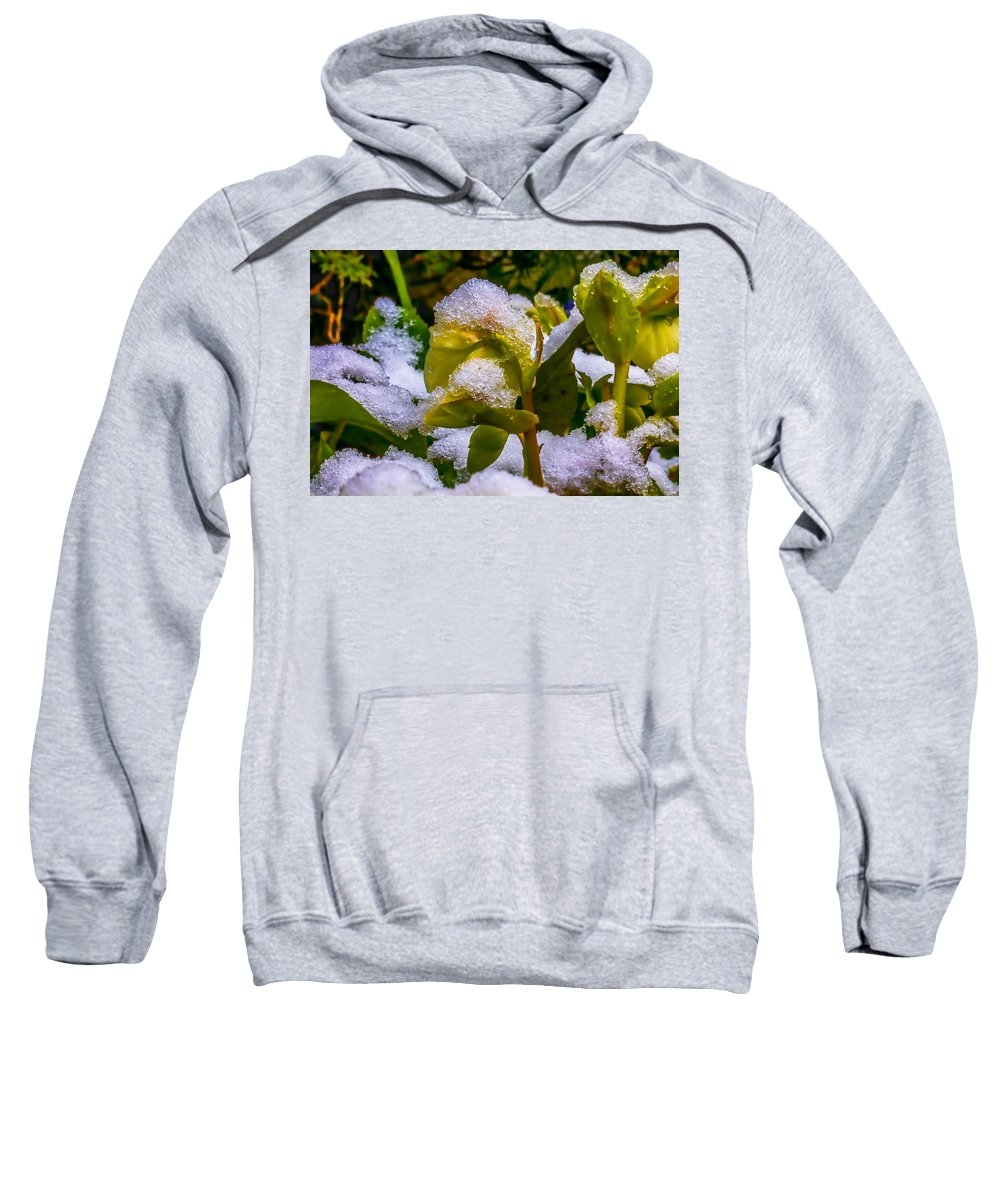 Snow Sweatshirt featuring the photograph Christmas Rose April 25 by Leif Sohlman