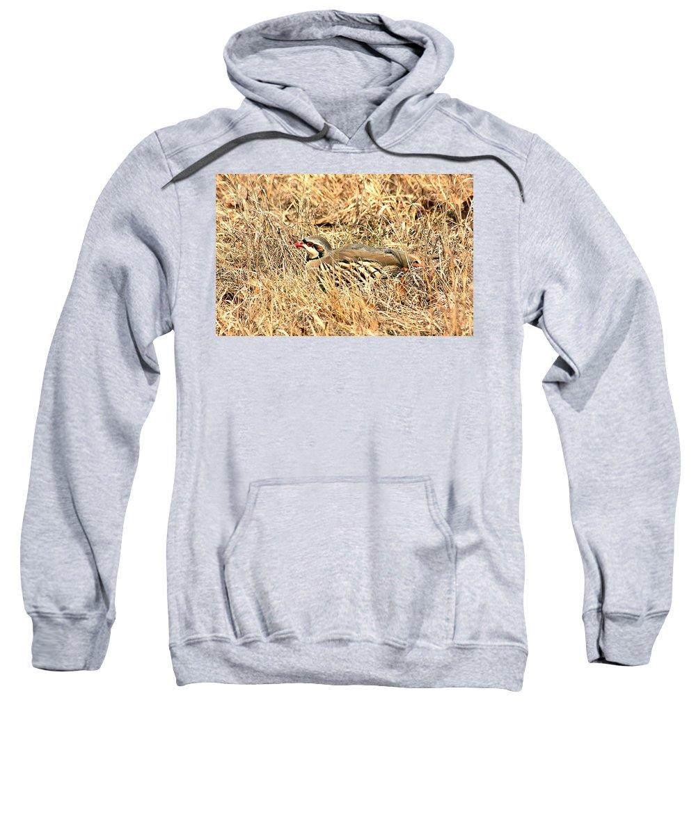 Nature Sweatshirt featuring the photograph Chuckar Bird Hiding In Grass by Sheila Brown