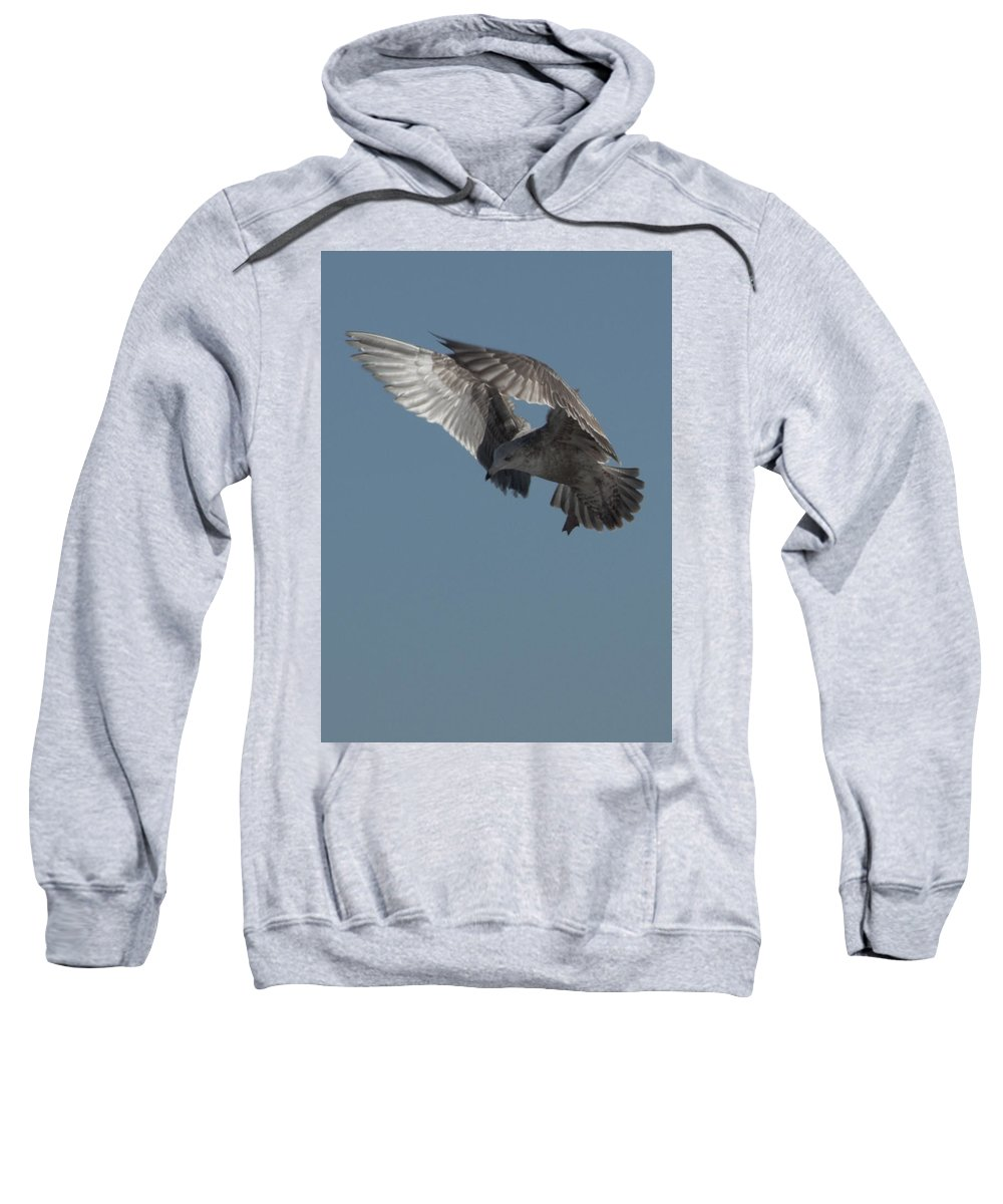 Seagull Sweatshirt featuring the photograph Clams For Dinner 3 by Steven Natanson
