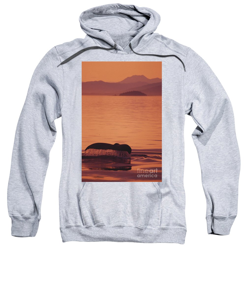 Admiralty Sweatshirt featuring the photograph Close-up Of Fluke by John Hyde - Printscapes
