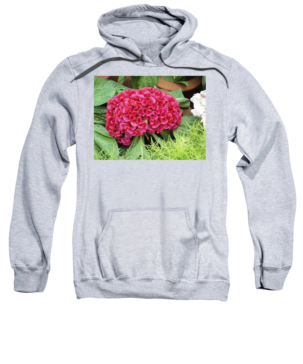 Flower Sweatshirt featuring the photograph Cockscomb Flower by Usha Shantharam