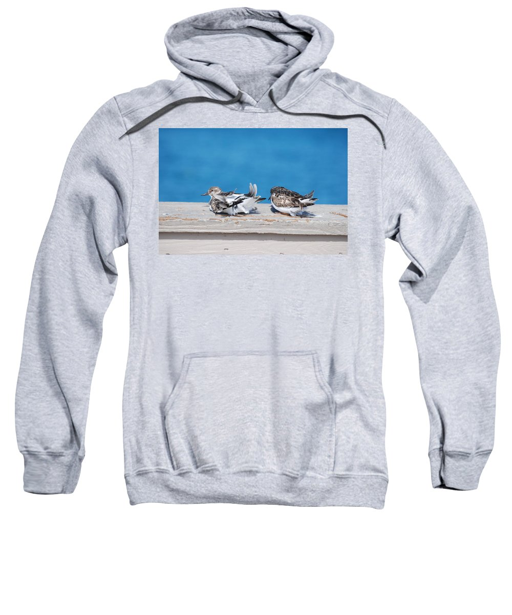 Bird Sweatshirt featuring the photograph Cold Birds by Rob Hans