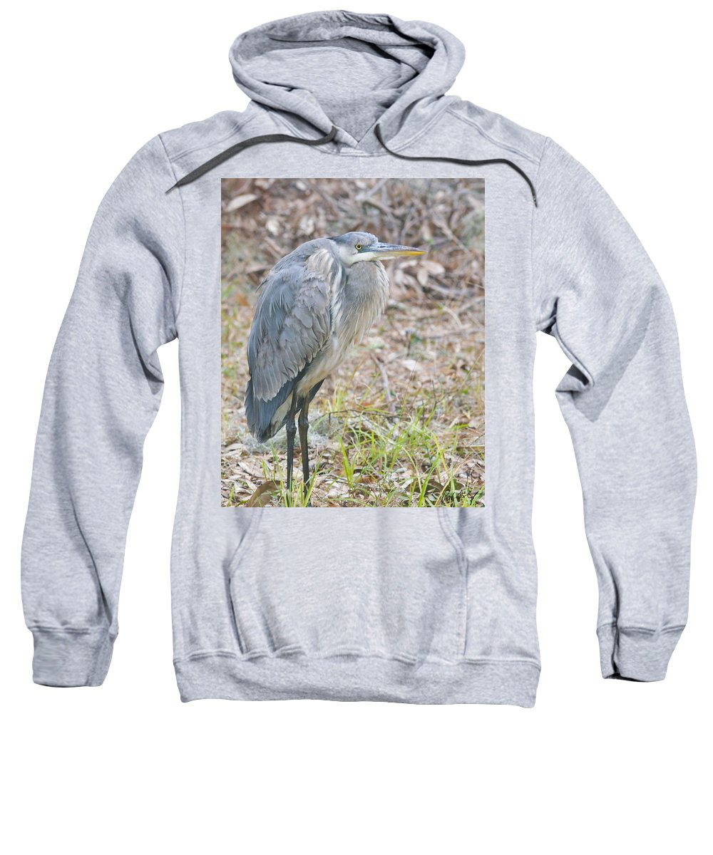 Bird Sweatshirt featuring the photograph Cold Blue Heron by Phill Doherty