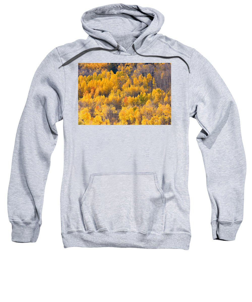 Trees Sweatshirt featuring the photograph Colorado High Country Autumn Colors by James BO Insogna