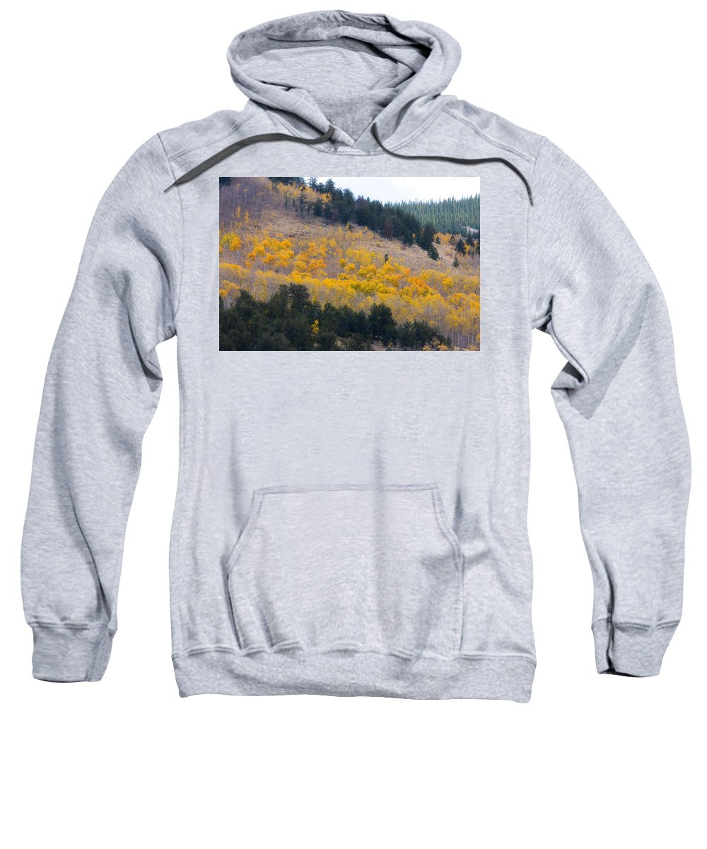 Trees Sweatshirt featuring the photograph Colorado Mountain Aspen Autumn View by James BO Insogna