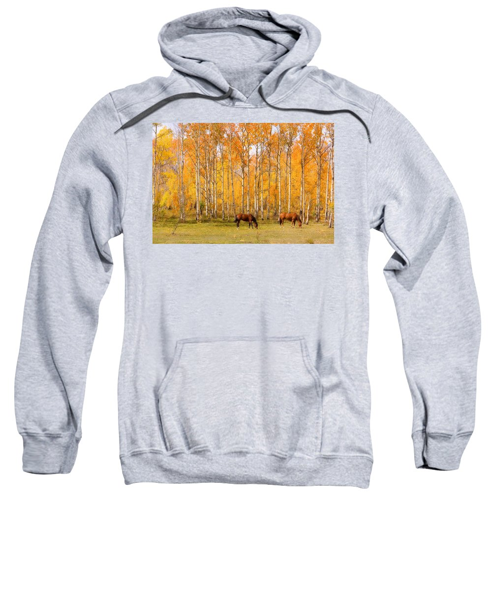 Country Sweatshirt featuring the photograph Colorful Autumn High Country Landscape by James BO Insogna
