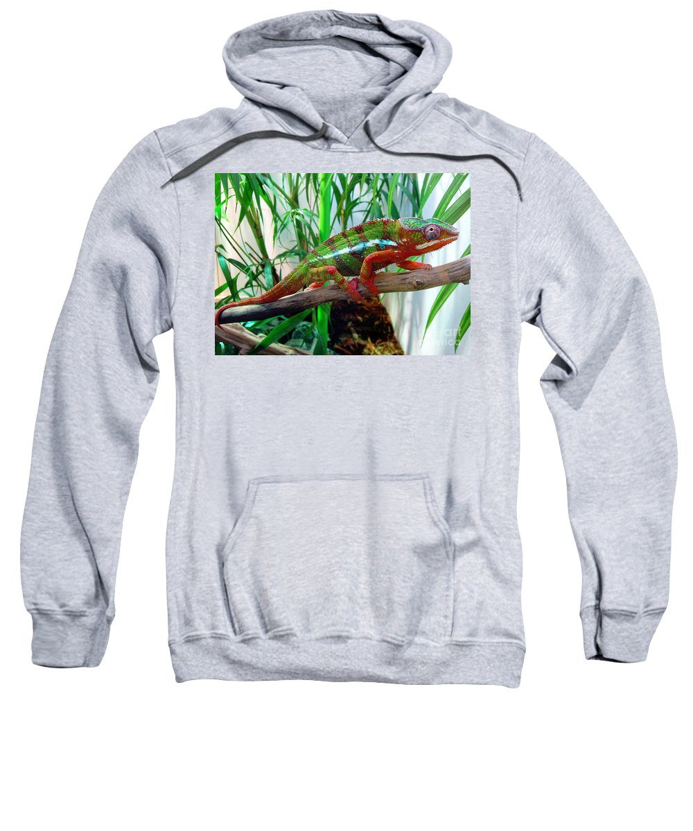 Chameleon Sweatshirt featuring the photograph Colorful Chameleon by Nancy Mueller