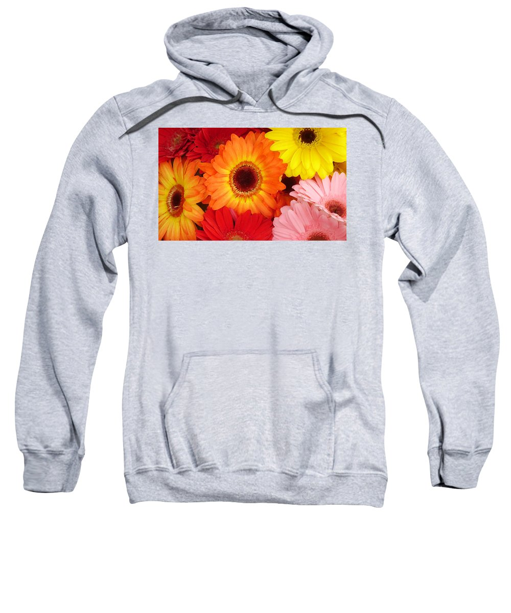 Gerber Daisy Sweatshirt featuring the painting Colorful Gerber Daisies by Amy Vangsgard