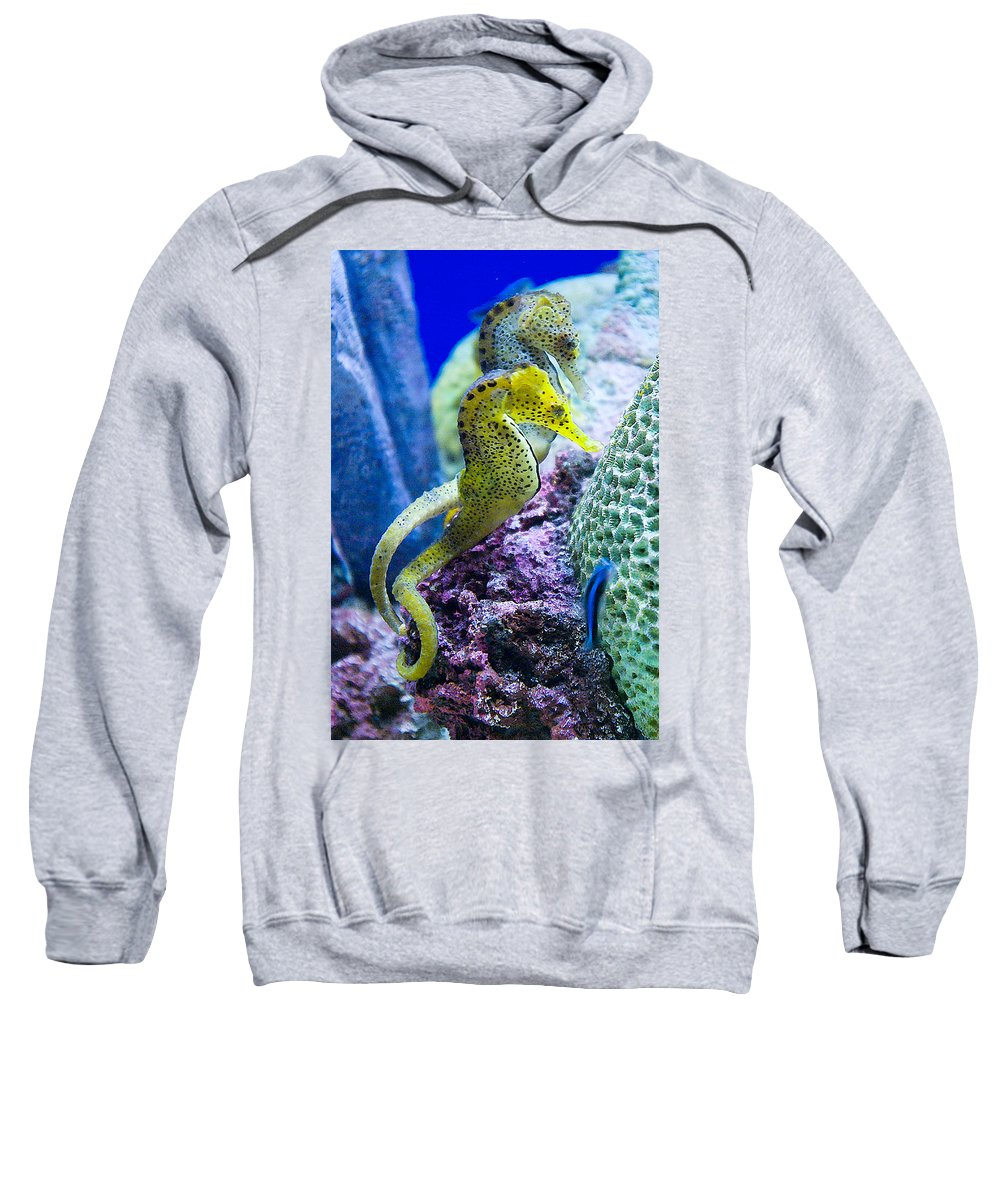 Seahorse Sweatshirt featuring the photograph Colorful Seahorses by Jim And Emily Bush