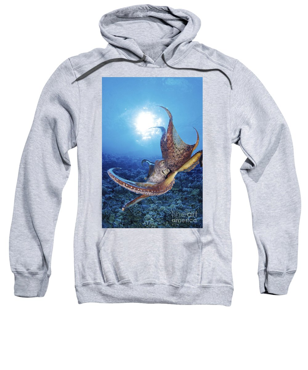 Animal Art Sweatshirt featuring the photograph Common Cuttlefish by Dave Fleetham - Printscapes