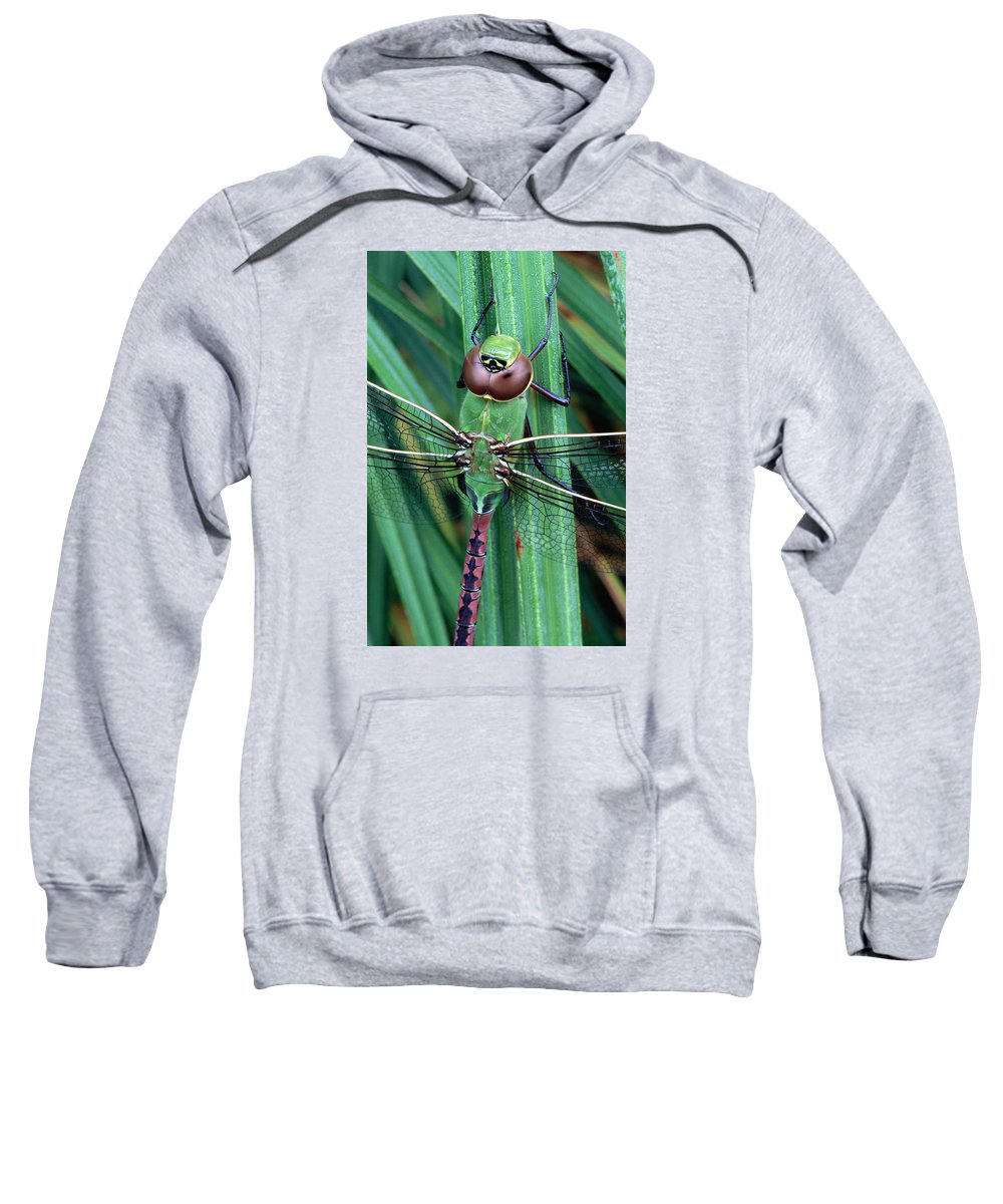 Dragonfly Sweatshirt featuring the photograph Common Green Darner by Bill Morgenstern
