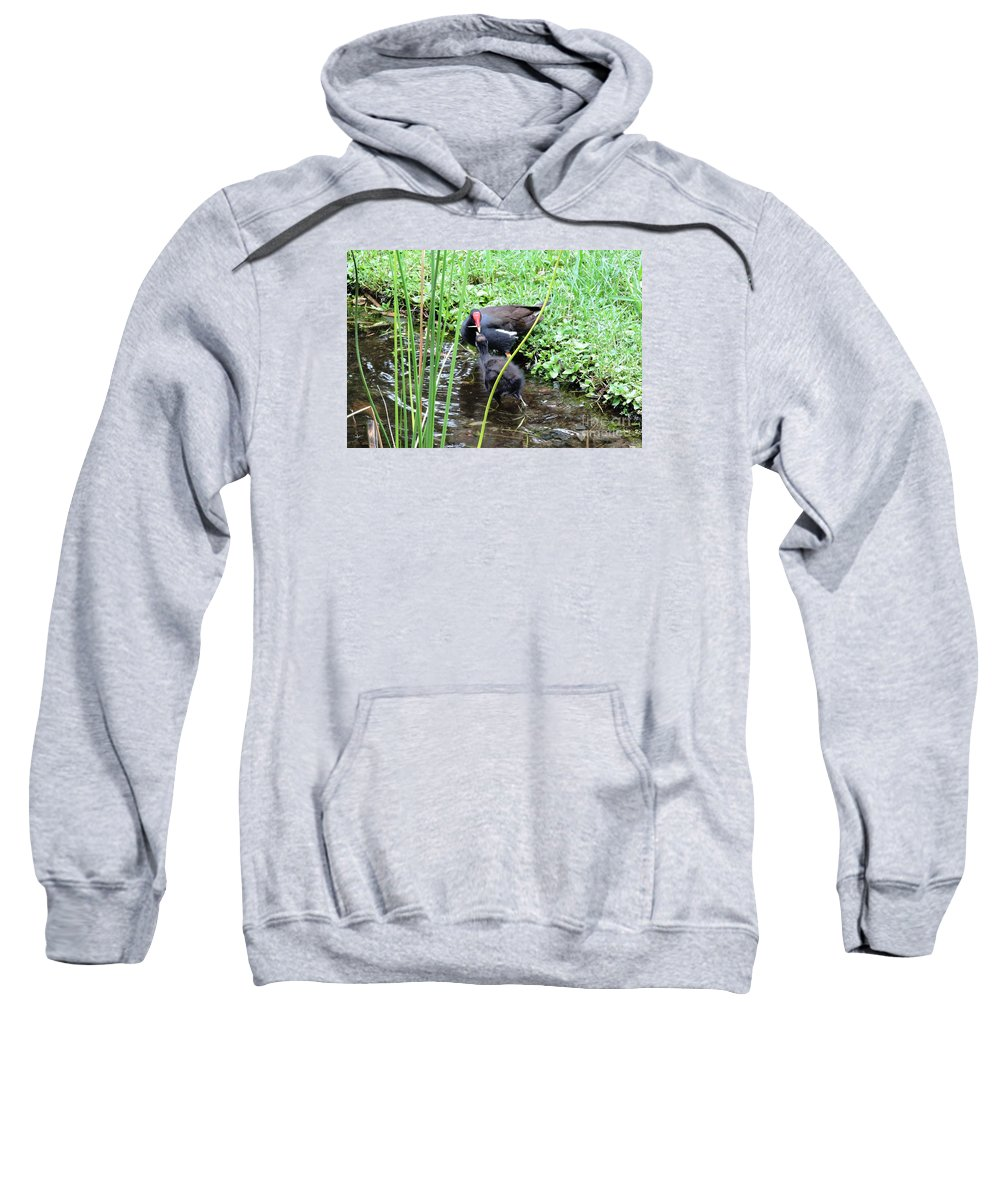 Long Toes Sweatshirt featuring the photograph Common Moorhen And Chick by Beth Williams