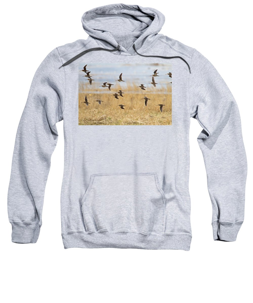 Snipe Sweatshirt featuring the photograph Common Snipe by Bob Kemp