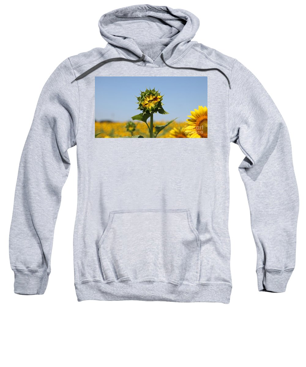 Sunflowers Sweatshirt featuring the photograph Competition by Amanda Barcon