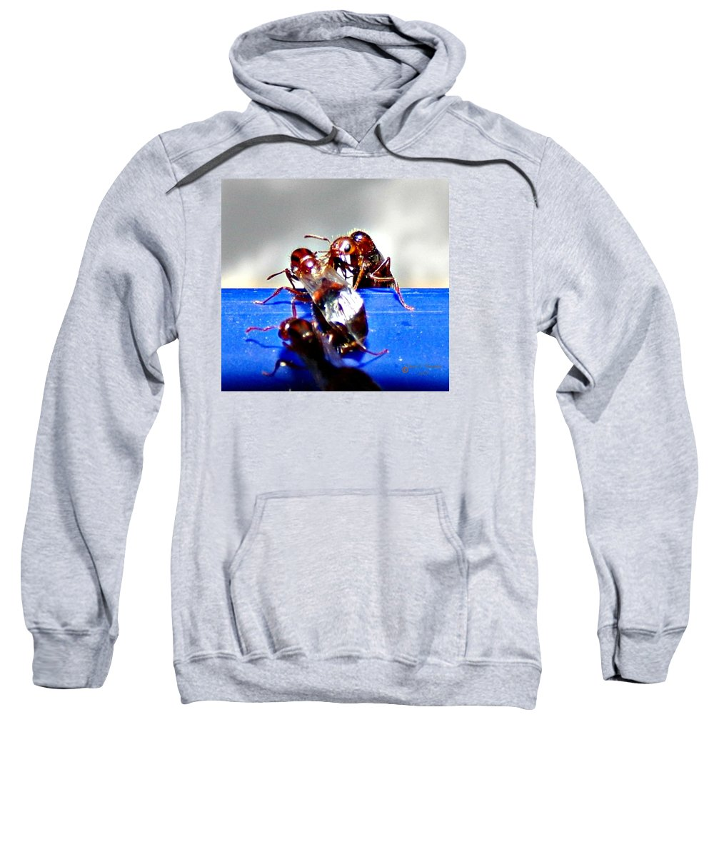 Ants Sweatshirt featuring the photograph Consider The Ants 2 Of 3 by Cheryl A Beaudoin