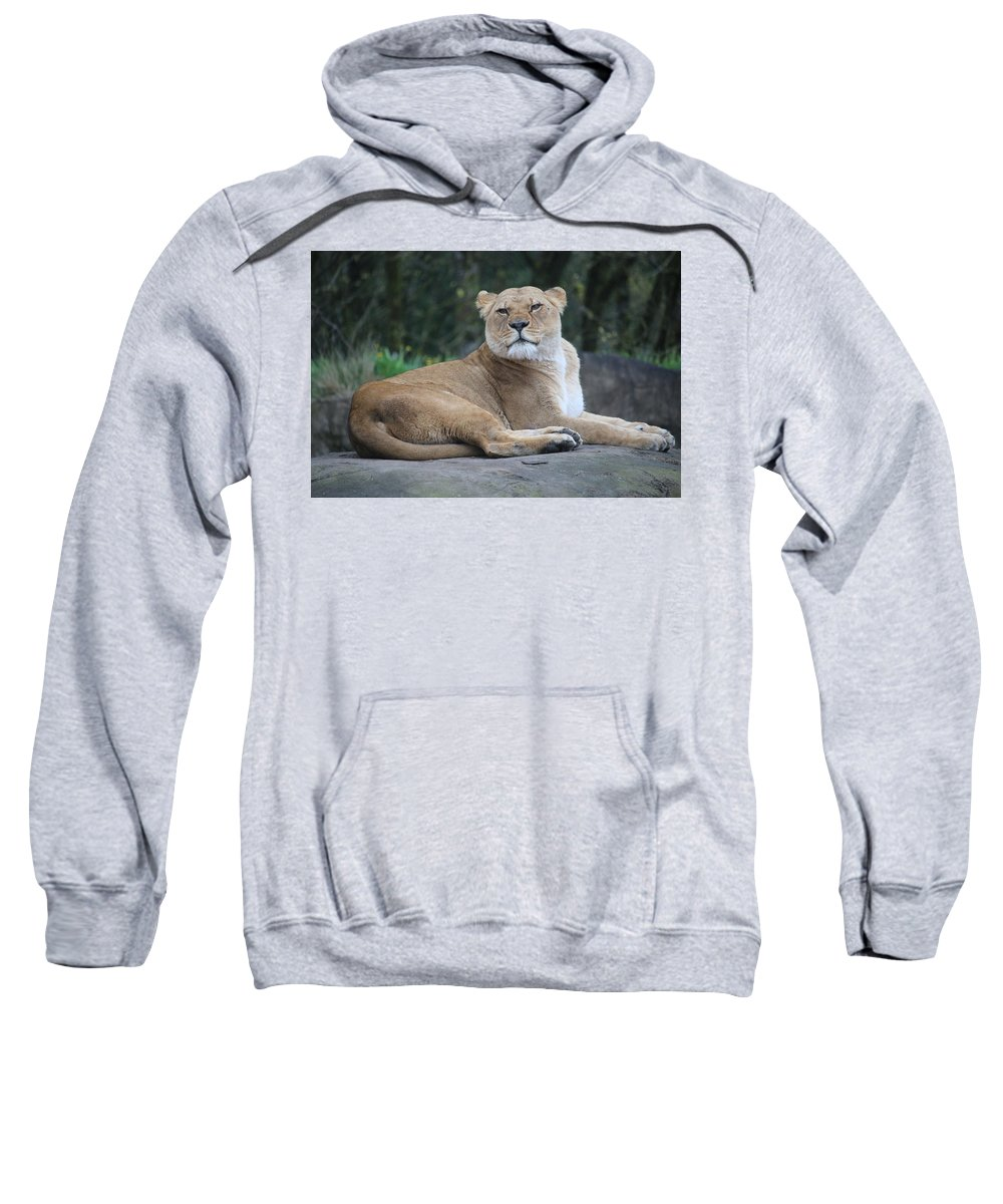 Sweatshirt featuring the photograph Contented Lioness by Crooked Cat Art and Photography