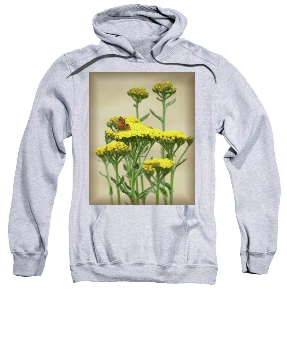 American Copper Butterfly Sweatshirt featuring the photograph Copper On Yellow - Butterfly - Vignette 2 by MTBobbins Photography