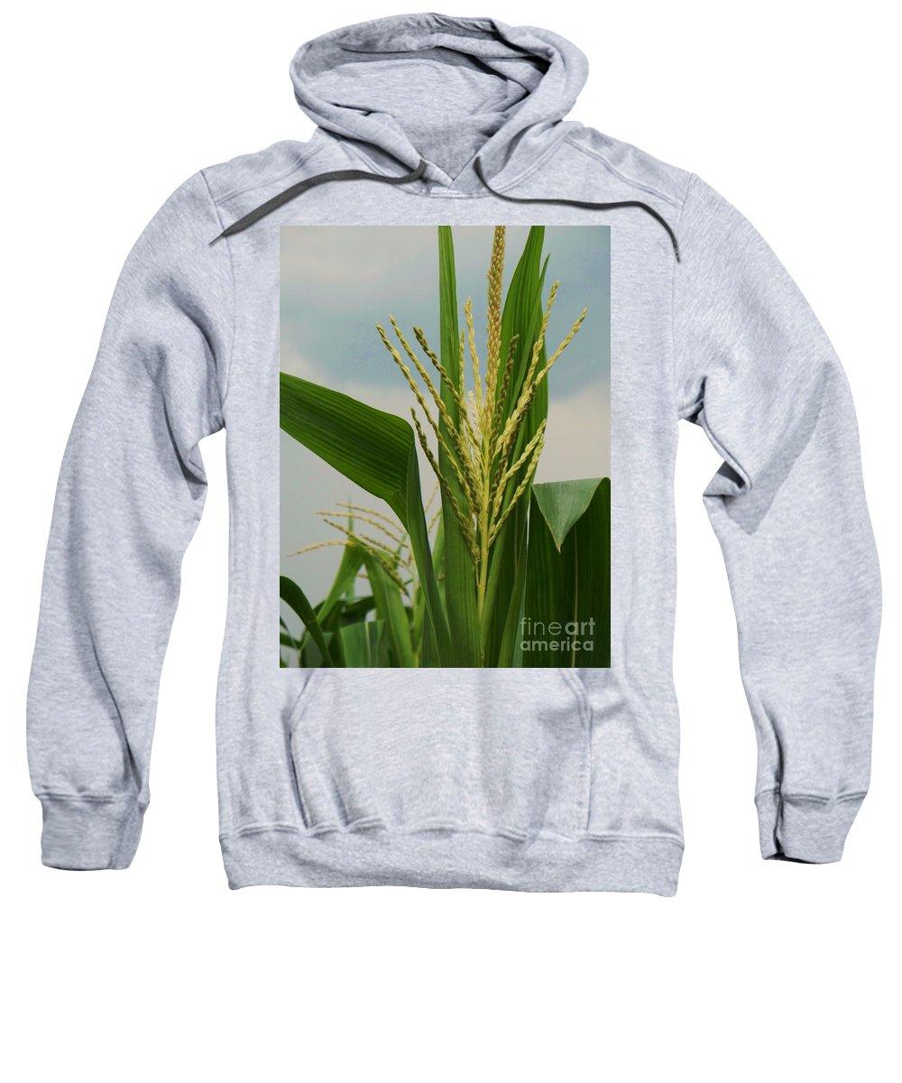 Corn Stalk Sweatshirt featuring the photograph Corn Stalk by Eric Schiabor