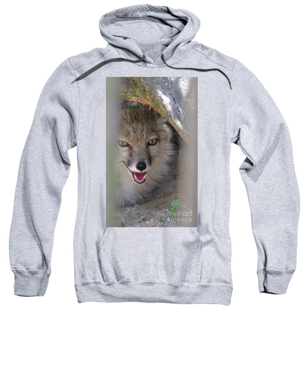 Corsac Sweatshirt featuring the photograph Corsac Fox- Vulpes Corsac 01 by Ausra Huntington nee Paulauskaite