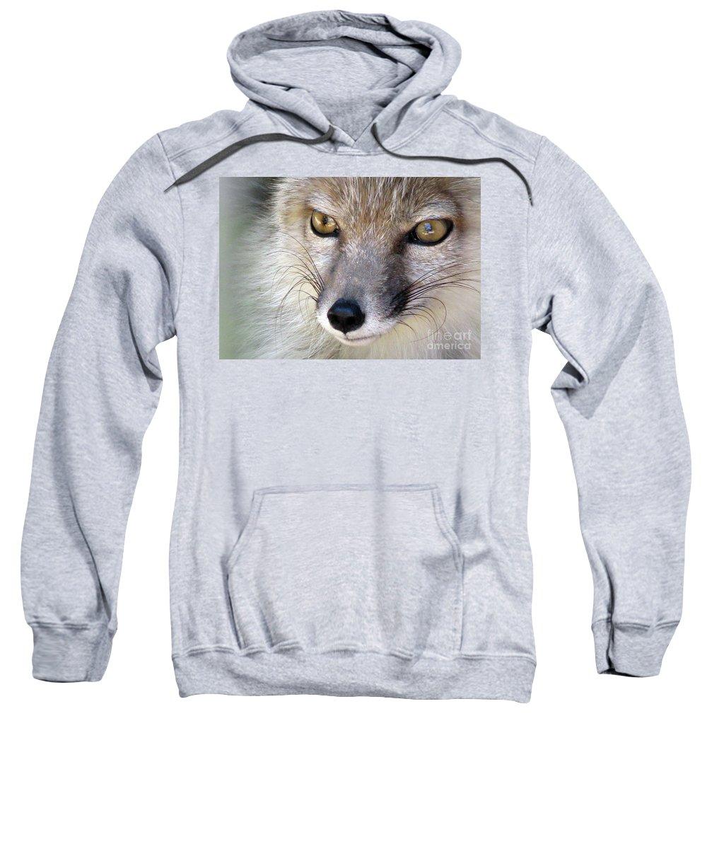 Corsac Sweatshirt featuring the photograph Corsac Fox- Vulpes Corsac 02 by Ausra Huntington nee Paulauskaite