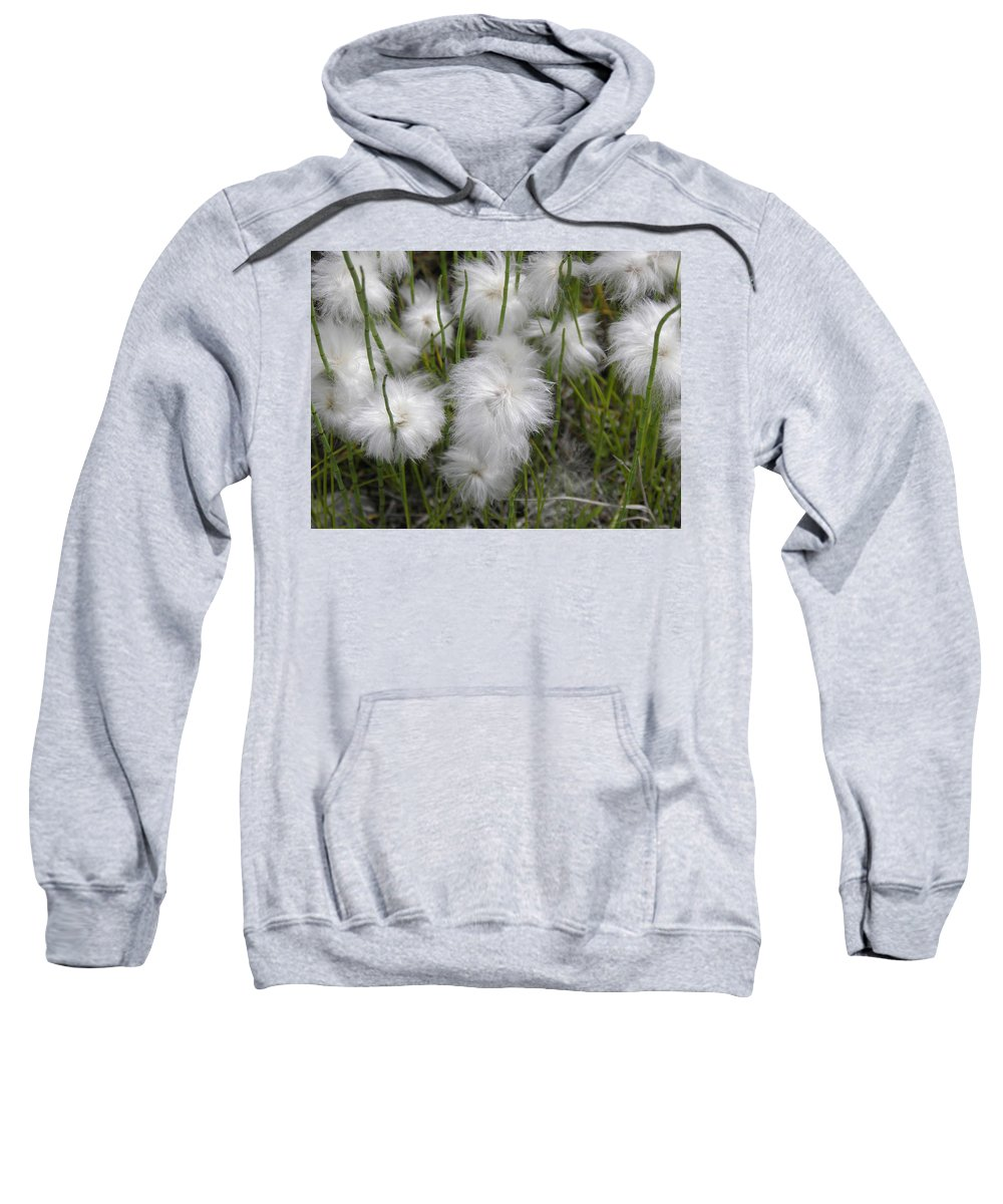Cottongrass Sweatshirt featuring the photograph Cottongrass by Fran Riley